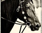 Black Horse, Sun Valley, Idaho 10 X 7 Fine Art Photo