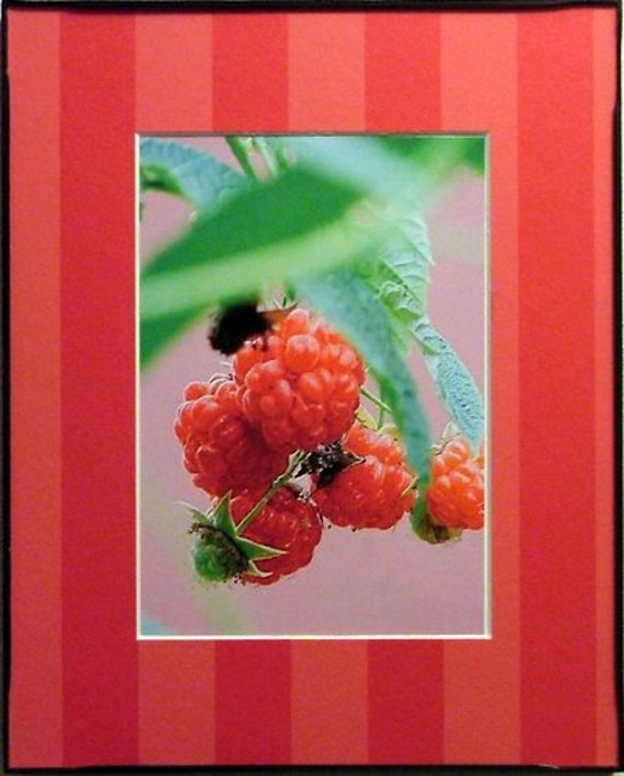 Ripe for the Pickin 8 x 10 matted and framed photo