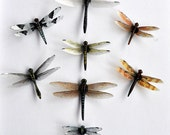 Dragonfly Magnets Clear wing Set of 8 Insects Kitchen Magnets Home Decor Handmade by Doug Walpus