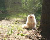 Kitty Photography - Persian Siberian Cat - Forest - Nature - Fine Art Photography 8x10 'Rawwr'