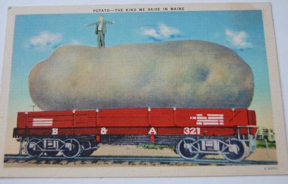 Vintage Post Card Huge Potato Maine Postmarked Augusta ME 1944 Paper Ephemera