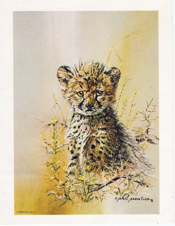 Vintage Baby Leopard Print 1976 Signed Phil Prentice Jungle