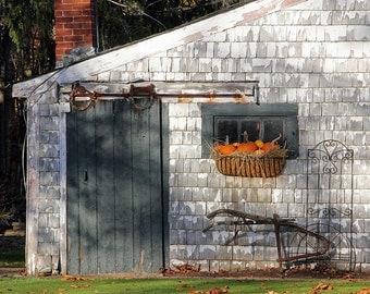 Fall Autumn Garden Shed Rustic Shed Pumpkins October Green Orange White Vintage Feel, Fine Art Photograph