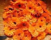 Calendula Flower - Orange - Heirloom  Organic  25 Seeds
