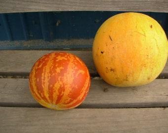 Melon - Tigger - Heirloom - Organic - Very Unique - 25 Seeds