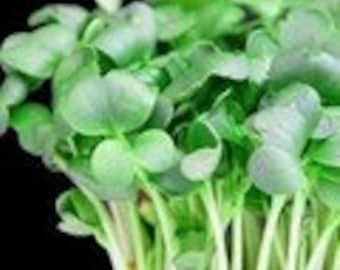 Watercress - Upland Herb  Heirloom  50 Seeds