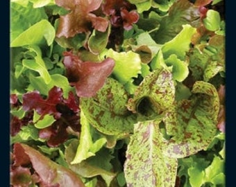 Lettuce - Salad Blend, Heirloom - 100 Seeds