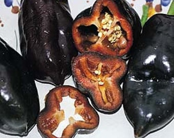 Pepper - Bell Sweet Chocolate - Heirloom - 25 Seeds