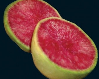 Radish - Chinese Red Meat (Watermelon) Heirloom -  25 Seeds