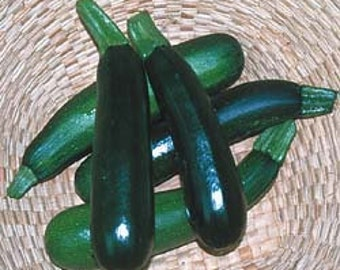 Squash - Zucchini Black Beauty - Heirloom - 20 Seeds