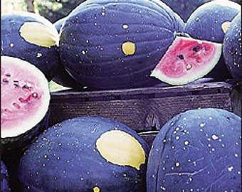 Watermelon - Moon & Stars - Heirloom - 25 Seeds