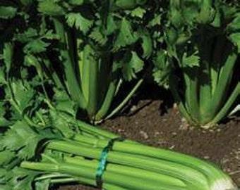 Celery - Tall Utah - Heirloom - 50 Seeds - Delicious Snack