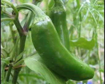 Pepper - Jalapeno -Heirloom - 25 Seeds