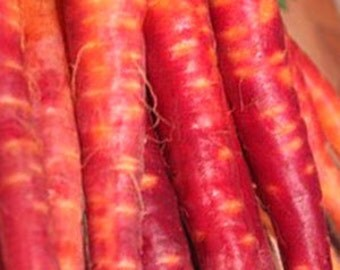 Carrot - Atomic Red - Heirloom - Great for Children - 50 Seeds