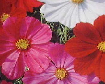Cosmos - Sensational Mixed Colors - Heirlooms - 30 Seeds
