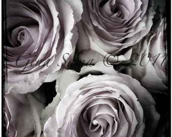 Vintage Faded Pink Roses 10x10 inch Photograph