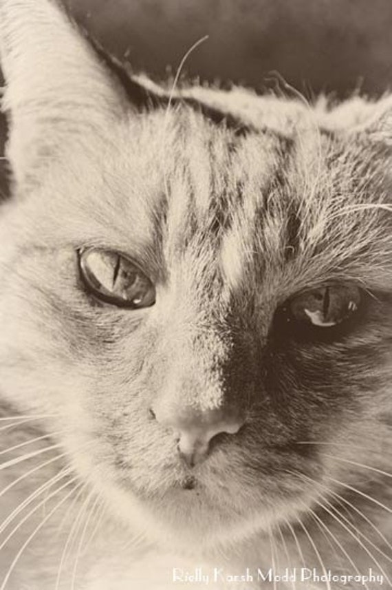 Items similar to Cat photo black and white, silver tone ...