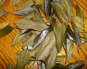 For RiTuAL & SpeLLS HOLLY LEAVES Dried .5 oz.  for PROTECTION PoWEr ENErGY