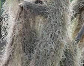 SPANISH MOSS SMUDGE SPRaY for PoWeRfUL PRoTecTiON