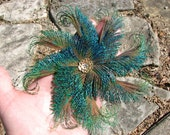 Peacock Sword Feather Flower Hair Clip Fascinator with Filigree Gold Toned Accent Piece and Rhinestone