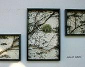 Birch Branch Triptych