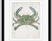 The Blue Crab - Ocean Life Series - graphic illustration design archival giclee art print 8.5x11
