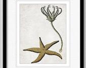 Starfish & Sea Lily - Ocean Life Series - graphic illustration design archival giclee art print 8.5x11