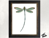 The Lovely Dragonfly - archival giclee art print 8.5x11