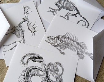 Animal Skeletons Postcard Set - Set of 4 cards - 5-1/2 X 4-1/4