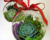 Succulent Orb Plant (Finished and ready for the giving - Not a kit)