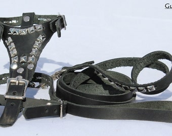 X-Small Black Leather harness and leash with Pyramids