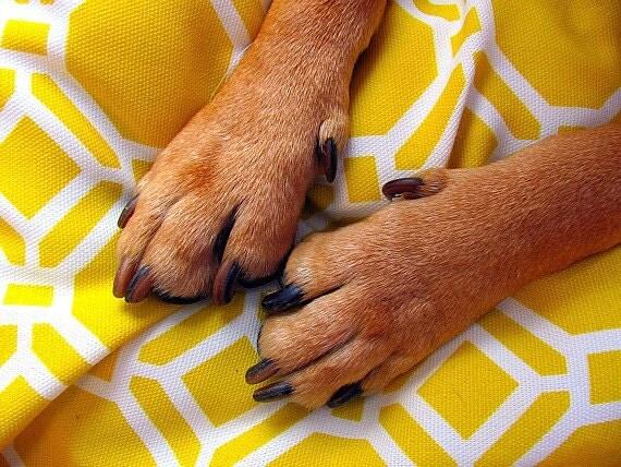 Large Dog Bed Cover, Yellow, White, Modern, Medium Dog Bed Duvet