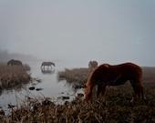 20x30 Fine art print. Chincoteague Ponies