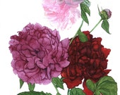 Note card with Peonies - Hand-painted - Peony Daydreams