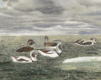 Original Watercolor Painting Sea Ducks on Stormy Sea Background Double-matted Framed