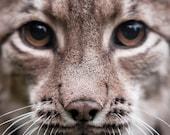 Lynx - Close Up - Photo Art Prints - Animal Art and Prints - Wildlife Photography - Nature Photos - Big Cats - Woodland Animal Art
