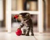 Kitten Photography - Cute Cat Print - Art For Nursery - Nursery Wall Art - Nursery small animal wall prints - Art Baby Room - 8 x 12 prints