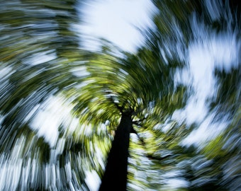 Tree swirl abstract photography art print. Trees nature photograph living room decor wall art. Twist, surreal, whimsical home decoration art