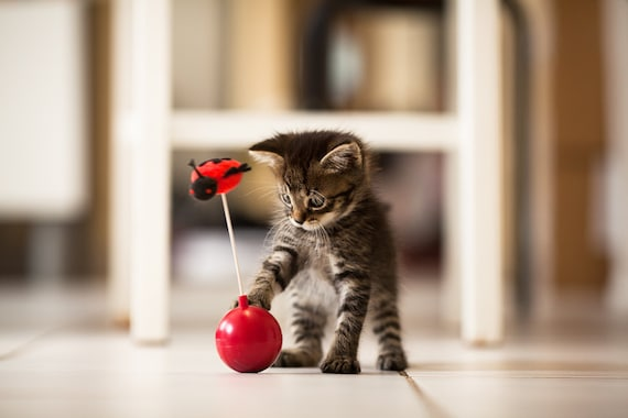 Kitten Photography - Cute Cat Print - Art For Nursery - Nursery Wall Art - Nursery small animal wall prints - Art Baby Room - 8 x 12 prints