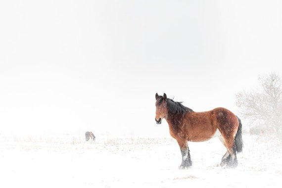 Horse in snow photography art print. Brown horse winter photograph. Equine nursery wall art home decor. Kids children cute bedroom hanging