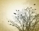 Autumn Crows in a Winter Tree Fine Art Photography 8 x10 Print