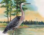 "Great Blue Heron Print / 16"" x 12"" Matted / Signed & Numbered / Ltd. Ed. Lithograph"