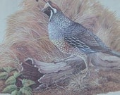 California Quail, bird lithograph, rustic cabin decor, hunting, bobwhite, C. O. Godwin, Arthur A Kaplan Co NY F-5174, gift for guy, woodland