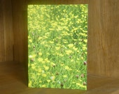 Buttercup Meadow photographic cards. Printed on semi- gloss card. Yellow.  A6 size. Blank.