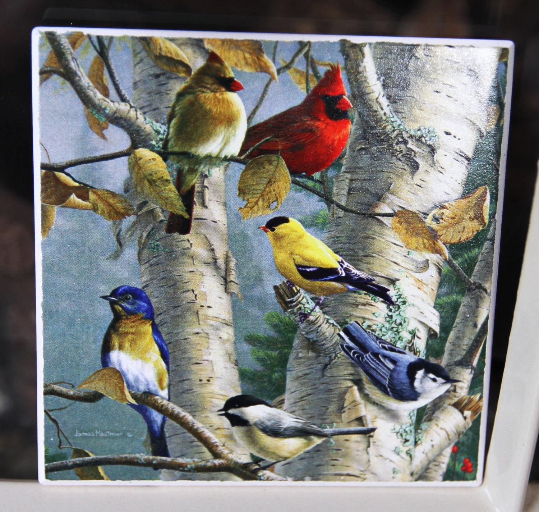 Songbird Coasters Set Of 4 James Hautman Songbird Print On