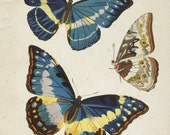 Antique Butterfly Digital Collage Art Natural History Print Digital Download Blue Yellow