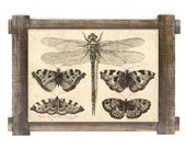 Antique Dragonfly and Butterfly Download Art Print Instant Download