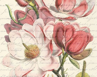 Antiqued Pink Magnolia Flower Digital Image Download Art Botanical Vintage Print French Script