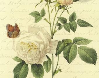 Antiqued Vintage Butterfly White Pink Rose Flower Floral Digital Download jpg French Script
