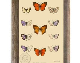 Antique Vintage Butterfly Digital Download Nature Natural History Print Orange Purple